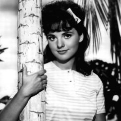 Dawn Wells Bra Size Height Weight Measurements